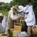 Dans l'Ain : cours d'initiation à l'apiculture bio  à Crozet (15 minutes de Genève)