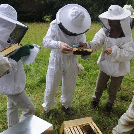 Cours d'initiation à l'apiculture bio © H. Trioux