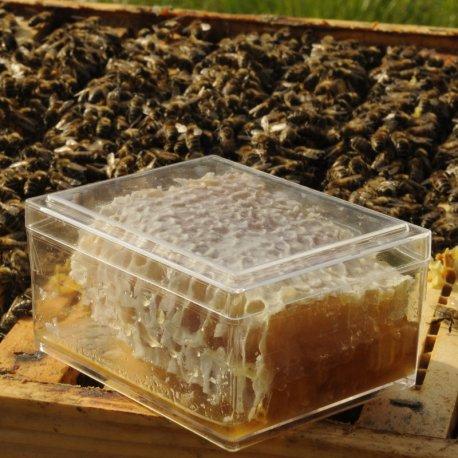 Miel en rayon en petite boite