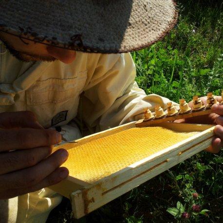 Cours d'élevage en apiculture © Stéphane D. Schulp