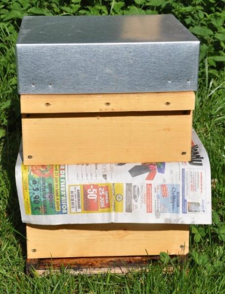 Réunion de 2 ruches au papier journal