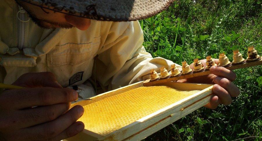 Je donne des formations d'élevage en apiculture en juin