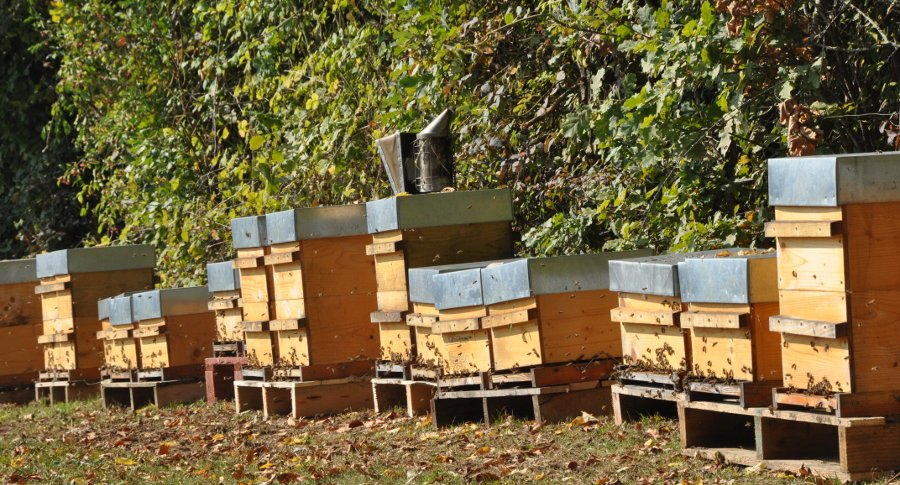 Je vends des essaims tout au long de la saison d'apiculture. Au format Warré et Dadant